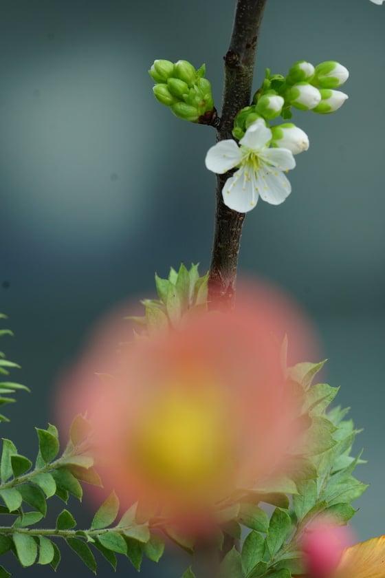rosafarbene Blüte verschwommen und Zweig mit weißen Blüten