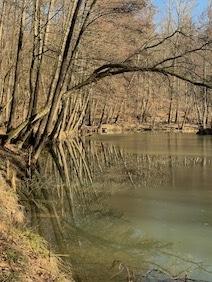 Uferböschung an kleinem Waldsee unbelaubte Bäume teilweise über das Wasser hängend auf dem Eisreste schwimmen