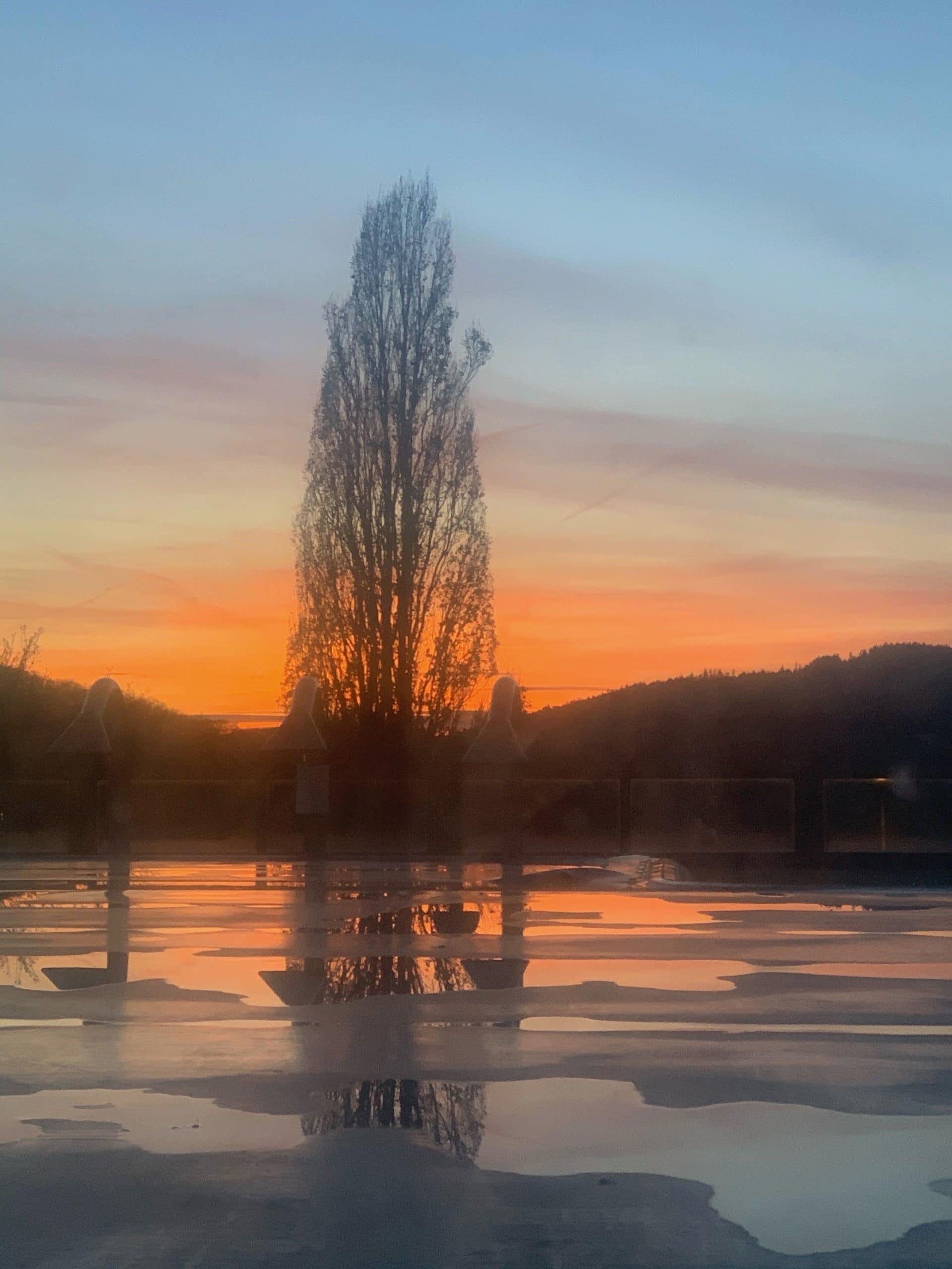Sonnenuntergang kahler Baum vor blassblauem orangefarbenem Himmel, im Vordergrund Wasserfläche mit Eis überzogen